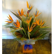 Bird of Paradise Aqua Handtied
